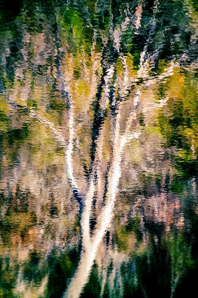 Rippling reflection of a gumtree in Pambula River, New South Wales, Australia